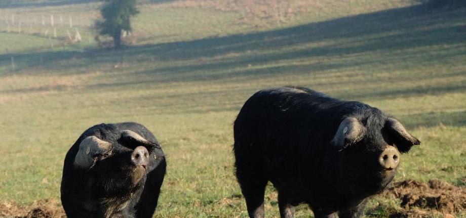 Visite de la ferme et commandes en click & collect sur RDV au 06.32.43.21.77